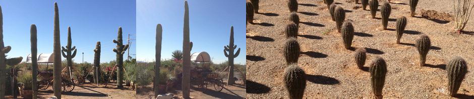 cactusheader11-4-12.jpg