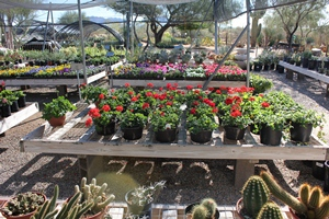 Annuals and Perennials - Many Choices Available