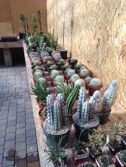 Dish Garden Selection