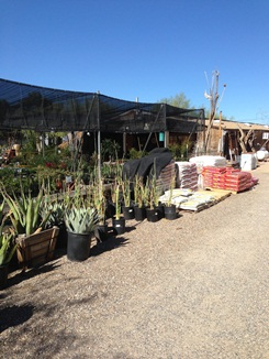 Wide Selection of Agave