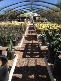 We carry a wide selection of cactus